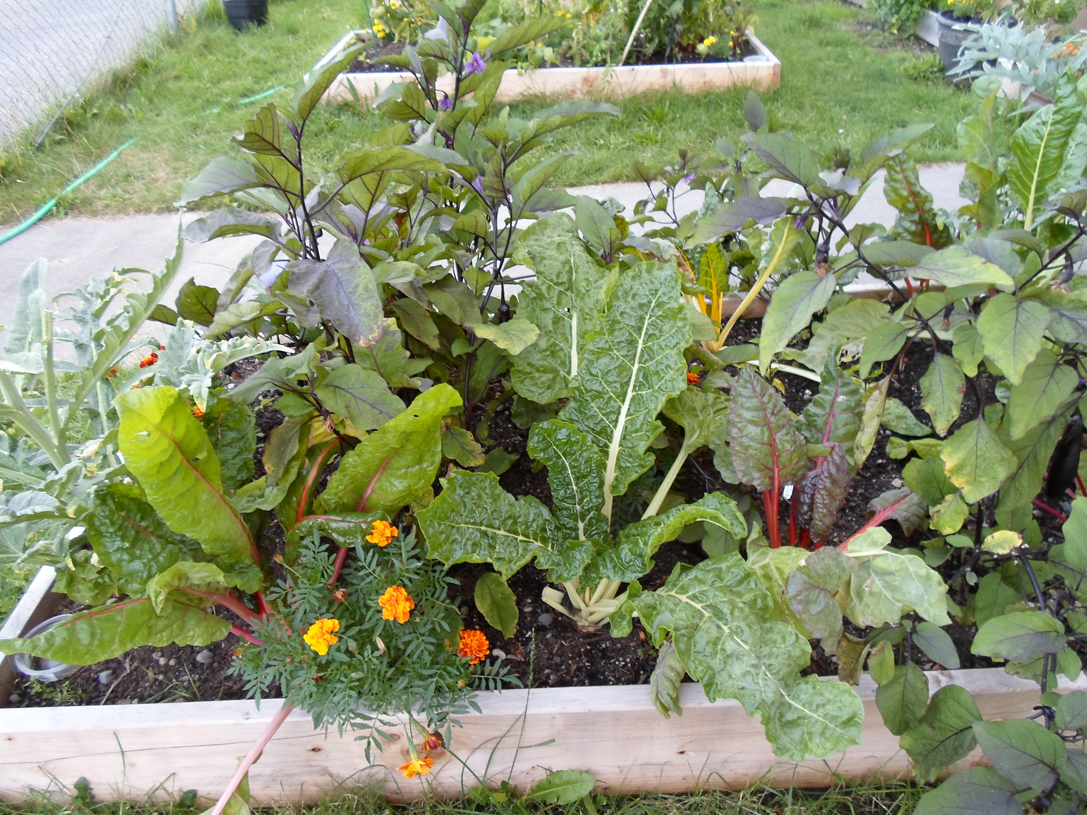 I Am Starting A Program For Vocational Training Working In Organic Gardening.  I Currently Have A Small Plot Of Land In The University District Of Seattle  ...